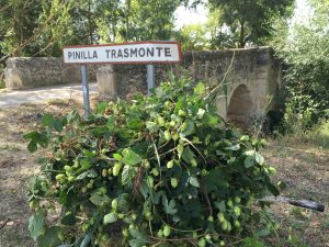 Lúpulo Silvestre en Pinilla Trasmonte