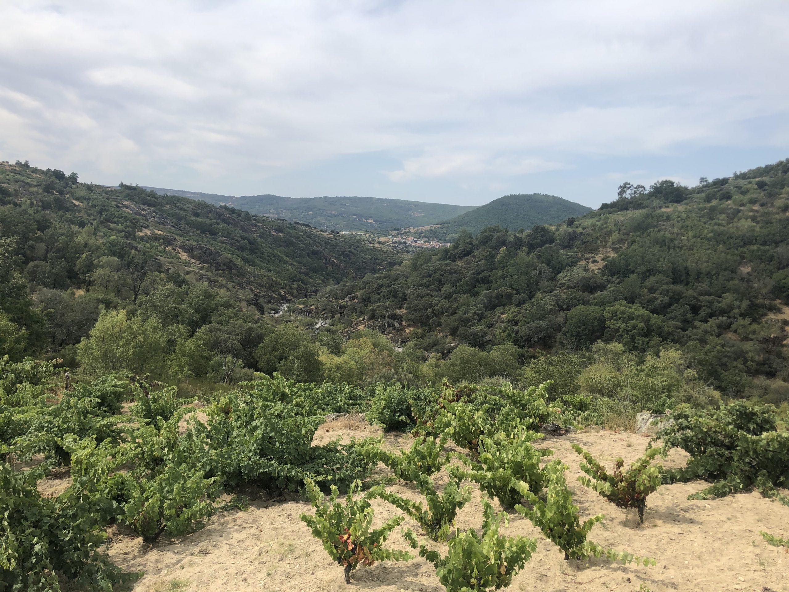 Paisaje de la Sierra de Salamanca con viñedos