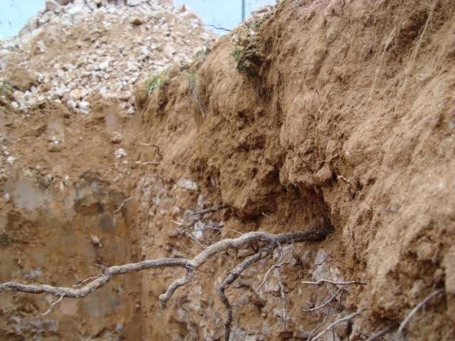 perfil de suelo donde la caliza es limitante para el desarrollo radicular