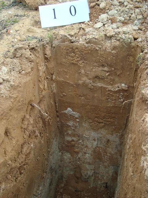 perfil de arena y caliza