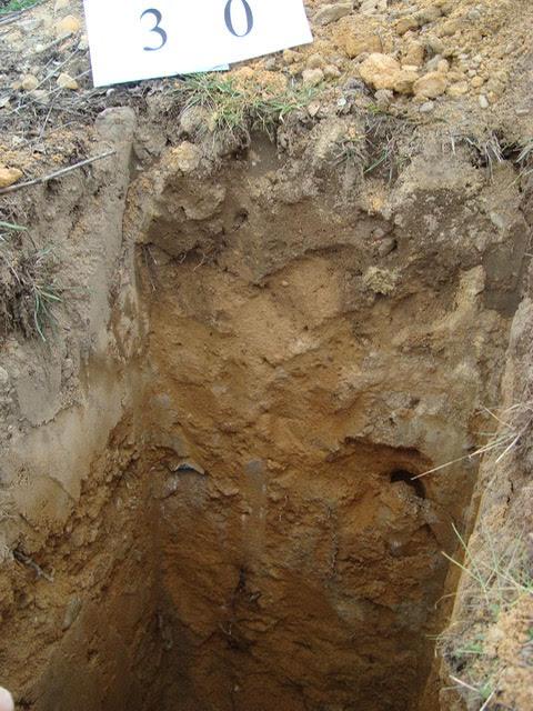 suelo orgánico y arena compacta